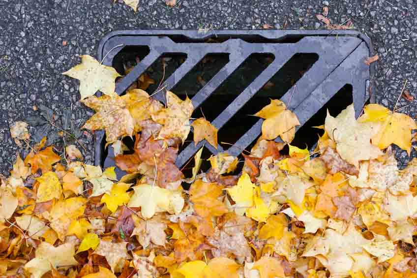 Why We Recommend Sewer Inspections During Fall